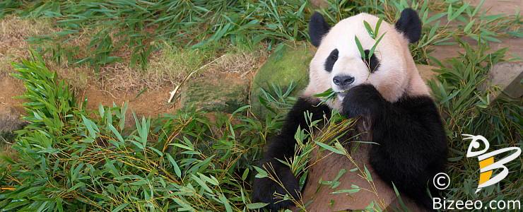 Google Panda SEO Recovery Montgomery AL 36106